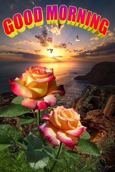 Good Morning Flowers Pictures, Flower Pictures, Good Morning Nature, Beautiful Morning, Good Night, Happy Faces, Rose, Messages, Nighty Night