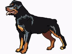 rottweiler:  My 4 year-old female rottweiler developed a urinary infection and started having accidents inside the house.  The pee had a very bad odor and nearly ruined