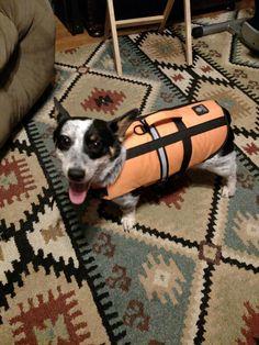 My Charlie's (cowboy corgi)ready to go to the lake. Cowboy Corgi, Ready To Go, Dogs, Animals, Animales, Animaux, Pet Dogs, Doggies, Animal