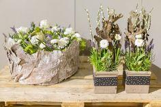 Bilder Hausmesse Januar 2016 | Willeke Floristik