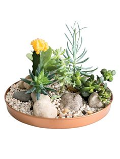 Simply elegant, watertight plant trays spruce up your indoor garden. Showcase your favorite plants while protecting surfaces from water damage. Fill with stones, add water and you have an instant humidity tray for orchids or herbs. Create a unique dish garden by planting with succulents and other small plants. More shapes and sizes at gardeners.com