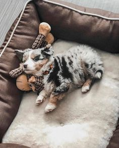 Aussie Puppies, Cute Dogs And Puppies, Baby Dogs, Doggies, Baby Animals Pictures, Cute Dog Pictures, Animals And Pets, Cute Little Animals, Cute Funny Animals