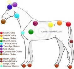 Getting to the Root of Pain & Behavioral Problems in Horses Part 3: Equine Major & Minor Chakras Horse and humans share similar energetic systems for the most part, and the first two articles in this Equine Chakras series covered the seven major chakras present in both species. In part 3, we explore the two …