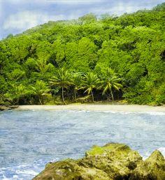 Insel am Wald