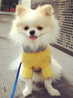 8 Dogs in Sweaters Because, Well, It's Fall