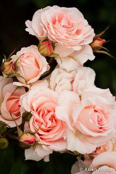 Aramaki Rose Garden - Japan // so mooi!