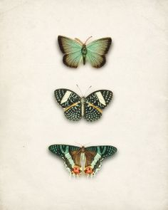 Green Antique Butterflies Collage Art Print No. 2 Natural History Wall Decor 8x10