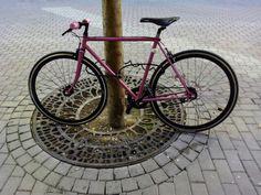 Single speed, pink, rueda flip-flop, tensor cadena, Albacete