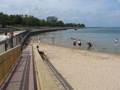 Foster Dog Beach in Chicago