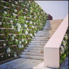 A living wall.
