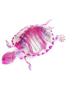 New world Transparent Specimen [Turtle]. Iori Tomita is a artist/fisherman from Yokohama City who dyes the skeletons of the dead marine animals he finds in the sea and on the beach.