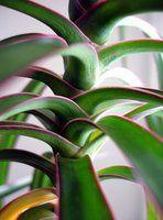 10 best house plants