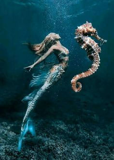 - Mermaid's Seahorse Original Mermaid photo by: Model: Digital seahorse art by: Decorative fins on my tail by: Fantasy Mermaids, Real Mermaids, Mermaids And Mermen, Pics Of Mermaids, Mythical Creatures, Sea Creatures, Rikki H2o, Mermaid Pictures, Mermaid Images