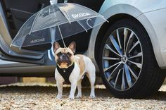 'Brolly good show' says UK dogs as Skoda unveils new simply clever canine umbrella http://thefuriousengineer.com/brolly-good-show-says-uk-dogs-as-skoda-unveils-new-simply-clever-canine-umbrella/?utm_campaign=coschedule&utm_source=pinterest&utm_medium=The%20Furious%20Engineer&utm_content=%27Brolly%20good%20show%27%20says%20UK%20dogs%20as%20Skoda%20unveils%20new%20simply%20clever%20canine%20umbrella