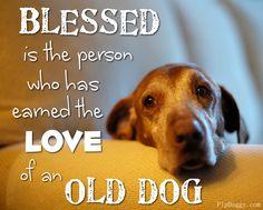 dog sayings, dog quotes, senior dogs, old dog