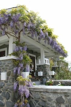 Wisteria growing over pergola. Whilst historic throughout idea, your pergola continues to be experiencing Patio Pergola, Wisteria Pergola, Pergola Ideas, Pergola Kits, Wisteria Trellis, Modern Pergola, Cheap Pergola, Pergola Plans, Wisteria Garden