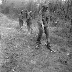 A mine-detecting part of 3rd Division at work, 25 November 1944. The leading man is wearing special protective clothing and 'skis' to spread his weight on the ground.