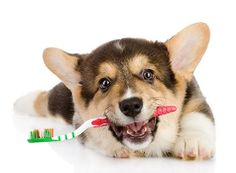 If you have a hard time brushing your dog's teeth, squeeze some enzymatic doggie toothpaste onto a Nylabone or rope toy and let your pooch go to town on it.
