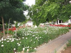 Rosenhof Country House - Oudtshoorn / South Africa Hotels And Resorts, Best Hotels, South Africa, Country, Nice, House, Rural Area, Home, Country Music