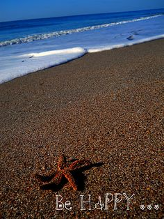 happy little starfish