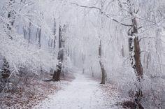 Winter Wonderland III.  #winter #snow #forest #frozen #white #nature