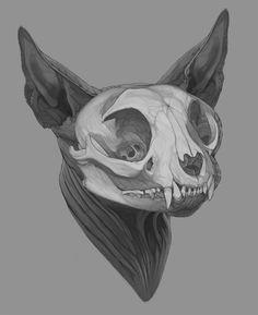 Anatomic Study - Sphynx cat's Skull on Behance Cat Skull Tattoo, Animal Skull Tattoos, Animal Skulls, Sphynx Cat Tattoo, Deer Skulls, Skull Anatomy, Cat Anatomy, Anatomy Art, Animal Skull Drawing