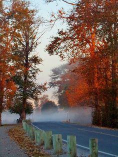 autumn in Richmond, BC