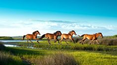 Going to add The Crystal Coast/Emerald Isle, NC to my list. I would love to see the wild horses running along the beach.