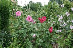 """""""Rosige Ein-und Aussichten in Steinburg"""" 2009, Garten in Kollmar, Foto: Winzek"""