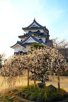 Hikone Castle by  RW Sinclair