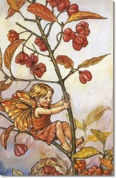 spindle berry fairy  cicely mary barker.