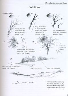 how to draw a tree bark