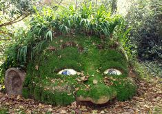 Discover The Enchanting Giants Of The Lost Gardens of Heligan