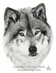 Dit is een geaseerde wolf voor inspiratie hoe ik de haren moet tekenen