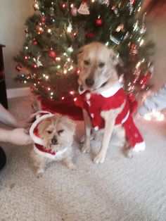 Lol!!! Not happy to be taking Christmas pics.