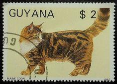 Items similar to Maine Coon Cat -Handmade Framed Postage Stamp Art 19512 on Etsy Postage Stamp Art, Going Postal, Vintage Stamps, Maine Coon Cats, Stamp Collecting, Cat Art, Ephemera, Cute Cats, Avatar