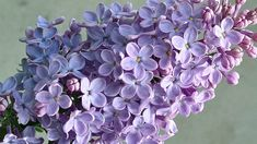 Ikebana, Bonsai, Lilac, Home And Garden, Exterior, Fruit, Flowers, Handmade, Painting