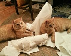 The twins eviscerate the deadly paper towel roll.