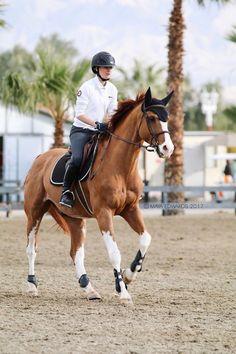 Cute Horses, Pretty Horses, Horse Love, Horse Girl, Beautiful Horses, Animals Beautiful, Horse Photos, Horse Pictures, Arte Equina
