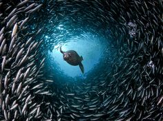 Galápagos sea lion | Photograph by David Fleetham, Visuals Unlimited, Inc./Getty Images