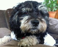 Mork the Mixed Breed-Cute!