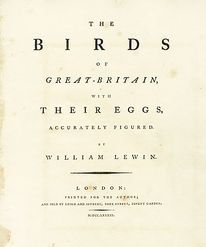 Some good ol' fashioned typesetting.  Lewin First-Edition Birds of Britain Prints 1789