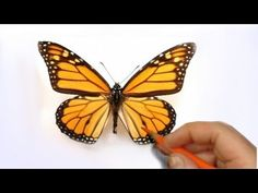 Color Pencil Drawing Tutorial How to Illustrate a Realistic Butterfly That Will Flutter Off of The Paper Art Ed Central loves :) - Plant Drawing, Painting & Drawing, Bob Ross, Watercolor Techniques, Art Techniques, Colored Pencil Tutorial, Cool Doodles, Illustration Techniques, Pencil Illustration