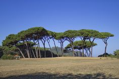 Baratti's Pinewood by Diego Luci