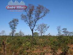 Traduçao  Fazenda - Jequitaí - Norte De Minas