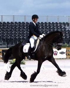 Talented FEI Friesian who will get you your Silver and Gold medals. Forward thinking with beautiful movement that are light to the aides. Gorgeous pirouettes, tempis to ones and on the spot piaffe. 2012 High Score at GDF in the Brentina Cup. $110,000 Dressage Horses, Friesian Horse, Draft Horses, All The Pretty Horses, Beautiful Horses, Mane N Tail, Horse Breeds, Horse Love, Ponies