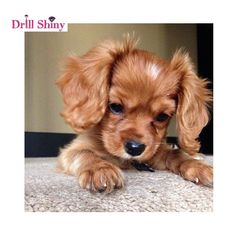 List of the cutest dog breeds in the world with picture. Do you-Liste der süßesten Hunderassen der Welt mit Bild. -… List of the cutest dog breeds in the world with picture. Do you make them pets? Super Cute Puppies, Baby Animals Super Cute, Cute Baby Dogs, Cute Little Puppies, Cute Dogs And Puppies, Cute Little Animals, Cute Funny Animals, Doggies, Funny Dogs