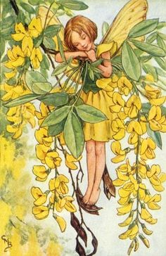 The Laburnum Fairy -Cicely Mary Barker www. The Laburnum Fairy -Cicely Mary Barker w Cicely Mary Barker, Vintage Wall Art, Vintage Prints, Images Vintage, Fairy Pictures, Vintage Fairies, Beautiful Fairies, Flower Fairies, Fantasy Illustration