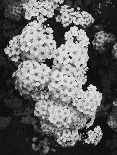 #black #white #blacknwhite #blackandwhite #black-and-white #black&white #flowers