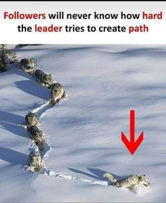 Leader's hardwork – Humor Funny Wisdom Quotes, True Quotes, Funny Quotes, Lone Wolf Quotes, Pictures With Deep Meaning, Meaningful Pictures, Science Quotes, Warrior Quotes, Pretty Quotes